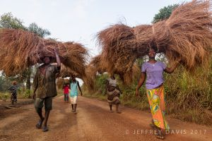 THATCH ROOF IN MOTION, PUJEHUN, SIERRA LEONE