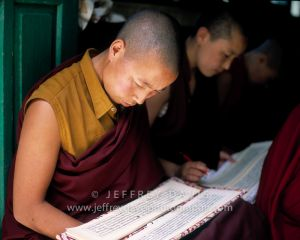 STUDYING TRADITIONAL TIBETAN PRAYER BOOKS, DHARAMSALA, INDIA