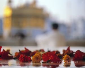 SIKH IN PRAYER, GOLDEN TEMPLE, AMRITSAR, INDIA