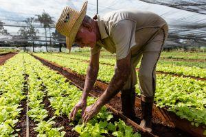NOEL, FARMER, RETIRED BIOLOGIST, PUENTO DE VENTA ORGANIC GARDEN, HAVANA REGION, CUBA