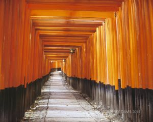 PATH OF PROMISE, FUSHIMI INARI SHRINE, KYOTO, JAPAN, 2006, SERIES C