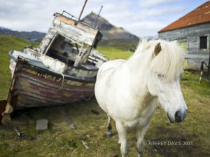 HORSE PLAY, HELNAR, WEST ICELAND, 2011, SERIES B