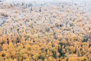 FROSTY, FIRST FALL STORM, GROS MORNE NATIONAL PARK, NEWFOUNDLAND, CANADA, 2015,  SERIES A