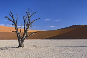 CAPTIVATED, DEAD VLEI, NAMIBIA, 2001, SERIES A