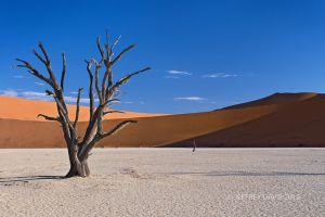 DEAD VLEI AT SUNSET, NAMIBIA