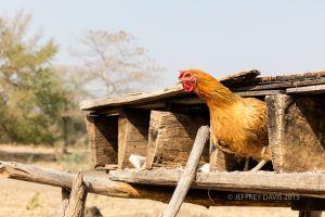 EGG FACTORY, MANDIA/SIANKABA VILLAGE, ZAMBIA