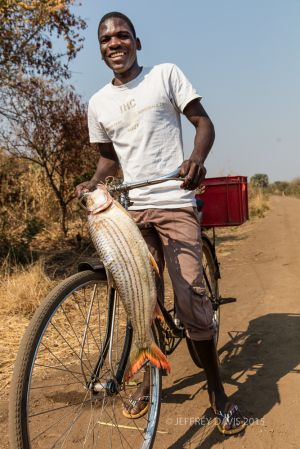NAFTALI, RIVER FISHERMAN AND FARMER WITH TIGER FISH, 20 YEARS OLD, MFUWE, ZAMBIA