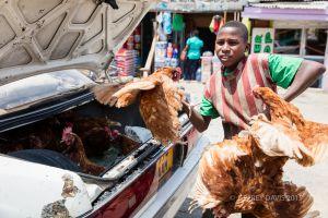 CHICKENS FOR SALE, NDOGO MARKET, TANZANIA